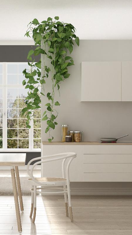 weiße Küche in einer Einzimmerwohnung