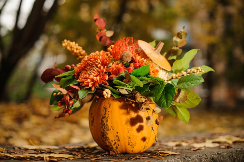 Kürbisse bepflanzen Herbstdeko